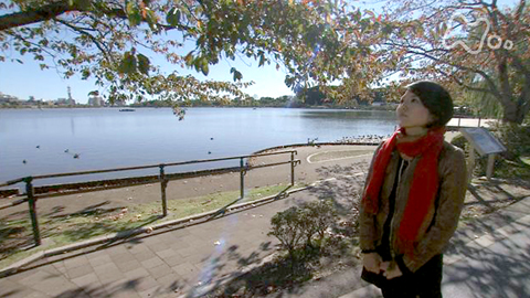 小さな旅秋深き 再会のとき~茨城県偕楽園公園