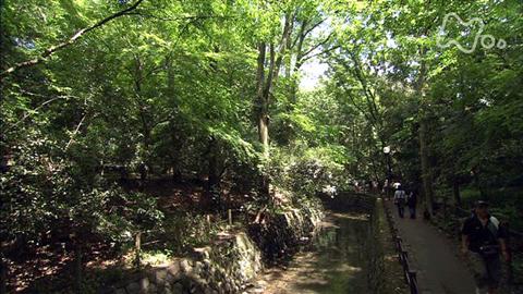 小さな旅街に緑のやすらぎ~東京 等々力渓谷~