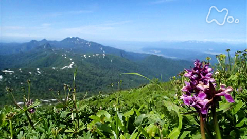 小さな旅山の歌 夏 花の道 きらめいて~北海道 夕張岳~