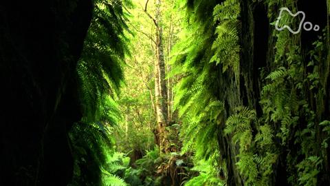 体感!グレートネイチャー探検!オーストラリア 緑の大峡谷~グレーターブルーマウンテンズ~
