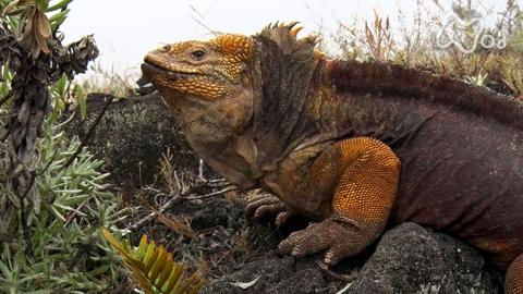 """体感!グレートネイチャー火山が生んだ""""生物大進化""""~エクアドル・ガラパゴス諸島~"""
