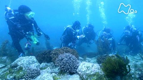小さな旅「サンゴの海に育まれ~徳島県 海陽町~」