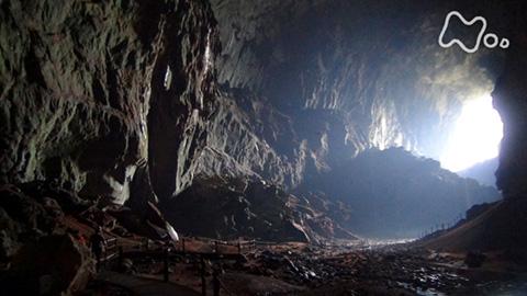 体感!グレートネイチャー「探検!密林の下の巨大迷宮~マレーシア・ボルネオ島~」
