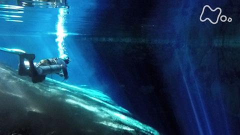 体感!グレートネイチャー「奇岩峡谷 地下水脈の謎を追え~不思議の島マダガスカル~」