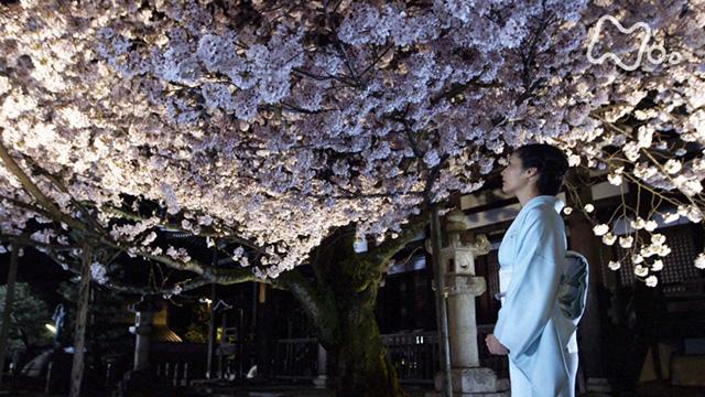 京都 人 の 密 かな 愉し み 再 放送